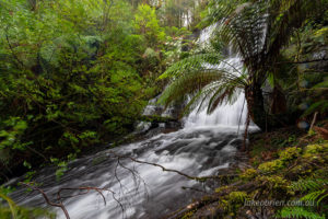 The rainforest clad Gold Creek Falls in the Styx Valley