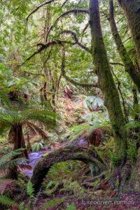 The beautiful green rainforest along Gold Creek