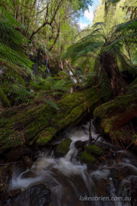 Regnans Falls in Tasmania's Styx Valley of the giants