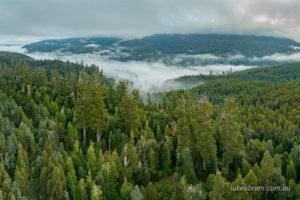 Tolkien Grove Styx Valley Tasmania