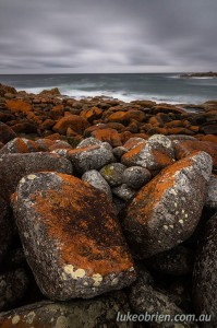 Lichen covered rocks in Granville Harbour