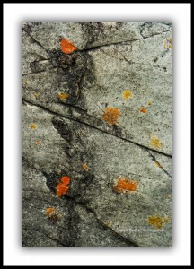 Lichen Abstract, Tarkine