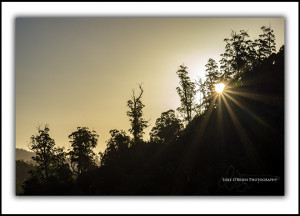 L213: Tarkine Forest Sunburst