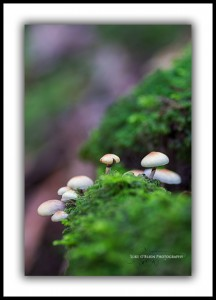 tarkine rainforest fungi tasmania