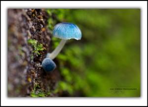 Tarkine fungi