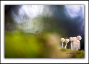Macro Landscapes Tarkine Fungi Tasmania