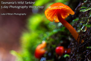 Tarkine fungi photography workshop Tasmania