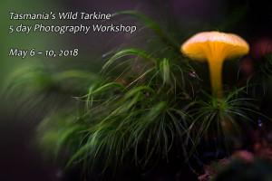 tarkine fungi photography workshop