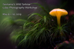 tarkine fungi photography workshop