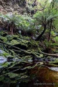 Lovers Falls creek, Tarkine
