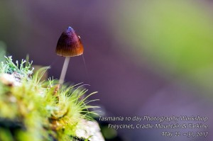 Tarkine photography tour tasmania