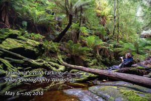 Tarkine rainforest photography workshop. May 6-10, 2018