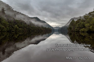 Pieman River Cruise, Tarkine