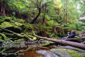 Tarkine rainforest photography workshop