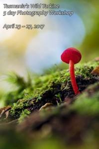 Fungi photography workshop - Tarkine April 2017