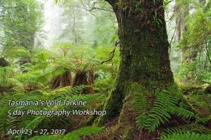 Tarkine rainforest photography workshop April 2017