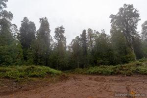 Logging road, Tarkine