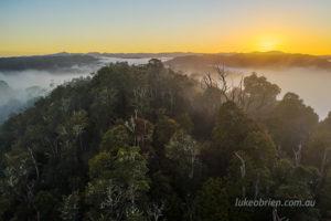 Tarkine rainforest aerial at sunrise