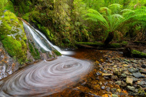 Cradle Mt & Tarkine 7 day photography workshop! Spring 2021