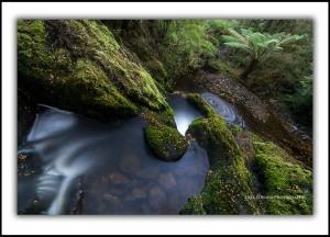 Tarkine rainforest Tasmania
