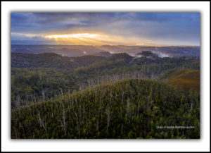 fine art photography tarkine rainforest tasmania