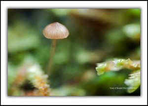 Tarkine rainforest landscape photos, toadstool, macro