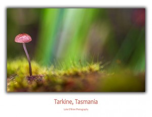 Tarkine Postcards: Toadstool Pink