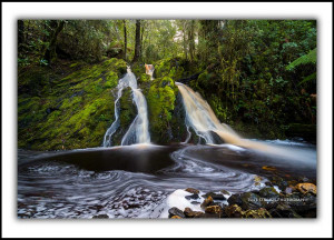 Tarkine Tasmania Fine Art Prints