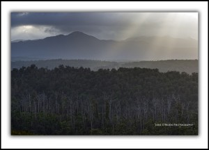 "Tarkine Tasmania ""Light"" Luke O'Brien Photography"