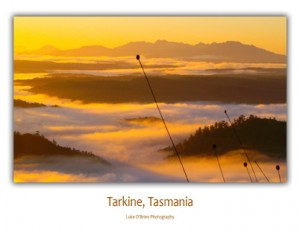 Tasmanian Postcards - Tarkine Buttongrass