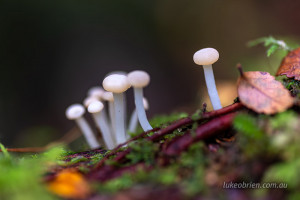 tasmania tarkine fungi corinna