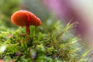 tasmania tarkine fungi philosopher falls