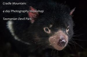 Devils@Cradle Tasmanian Devil Park