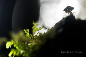 tasmanian fungi tarkine philosopher falls