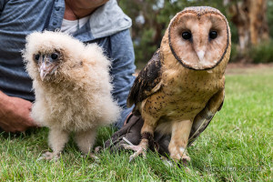 Bentley and Monty at the Raptor Refuge
