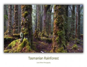 Tasmanian Postcards - Rainforest