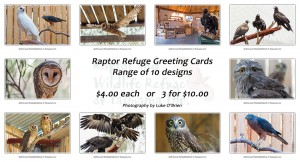 Tasmanian Raptor Greeting Cards