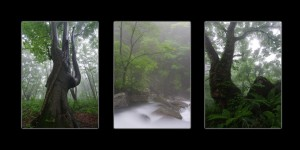 Mt Chokai Forest Scenes - Collection of 3 Photos