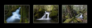 Mother Cummings Rivulet Rainforest Photos Tasmania