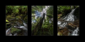 Tasmanian rainforest photos - Mt Field & Styx Valley