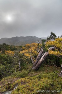 Tyndall Range, Autumn in Tasmania