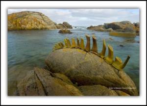 Tyrone Jaspers Tasmanian Sculpture King Island III