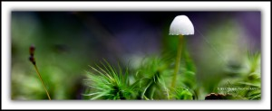 Tasmanian art photography - fungi, Upper Florentine