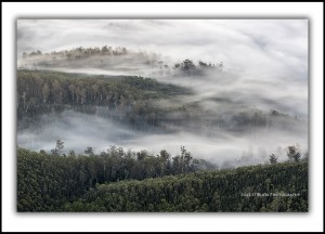 Tall trees and mist, Upper Florentine Valley