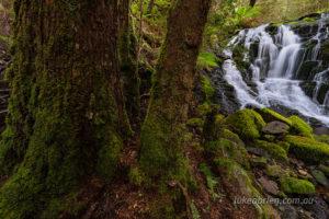 Upper Quaile Falls Tasmania