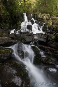 Wandle Falls Walk in Tasmania's Tarkine region