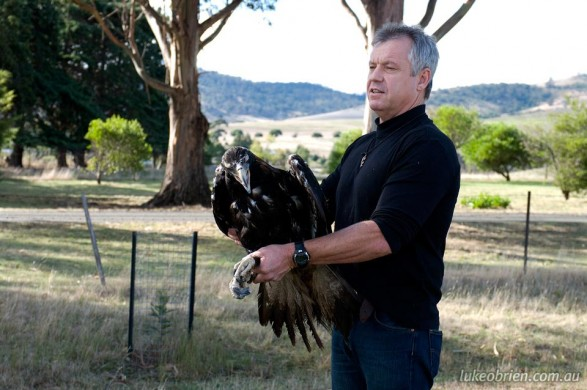 Wedge Tailed Eagle Release, Richmond, May 2012