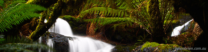 Great Tasmanian Rainforest Walks – Westmoreland Falls