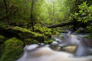 Wombat Creek Tarkine Tasmania