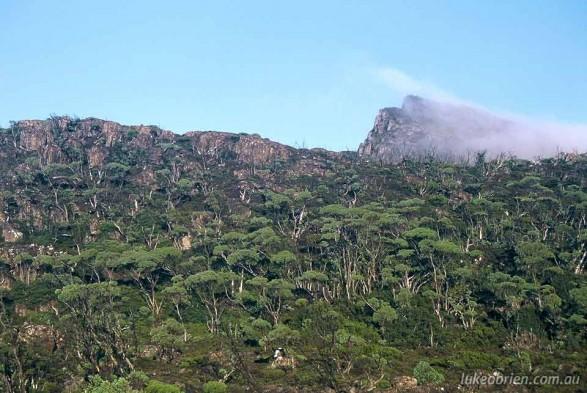 Wyld's Craig Tasmanian Bushwalking